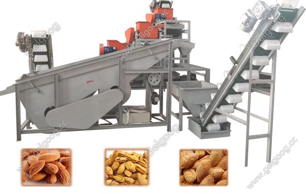 almond shelling plant factory